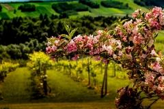 Pora kwitnienia